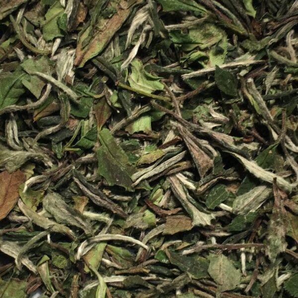 teapot_teas_larry_lord_white_white_peony_tea